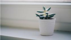 6 Design Tips For An Eco-Friendly Bathroom